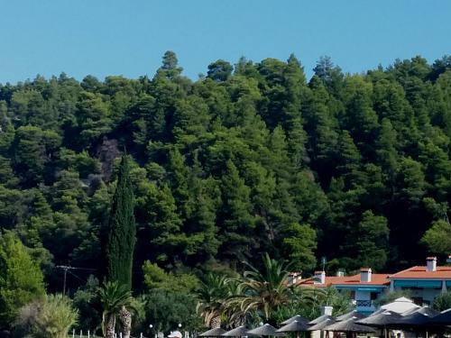 Нажмите на изображение для увеличения Название: Греческая природа.jpg Просмотров: 11 Размер:91.0 Кб ID:621