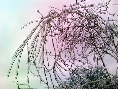 Нажмите на изображение для увеличения Название: Замерзшие ветки дерева.jpg Просмотров: 292 Размер:92.3 Кб ID:79