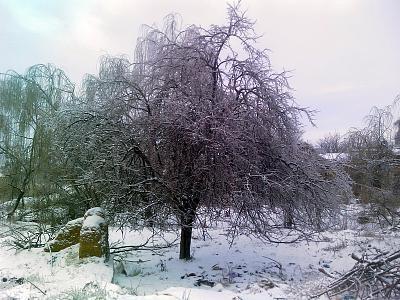 Нажмите на изображение для увеличения Название: Замерзшие деревья.jpg Просмотров: 274 Размер:93.7 Кб ID:80