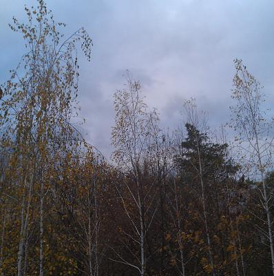 Нажмите на изображение для увеличения Название: Деревья вокруг храма.jpg Просмотров: 123 Размер:93.6 Кб ID:495